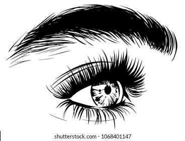 woman profile of eye with eyebrow
