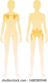 Woman silhouette with skeleton of the shoulder girdle and pelvic girdle location on body. Vector illustration