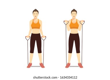 Woman using equipment for exercise with Resistance Band Bicep Curl in 2 step. Illustration about workout with lightweight equipment for targeting smaller muscles.