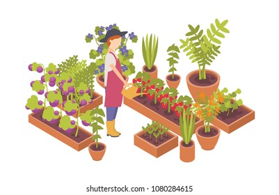 Woman wearing hat and holding watering can and plants growing in garden beds isolated on white background. Homegrown vegetables, eco friendly gardening and farming. Flat colorful vector illustration