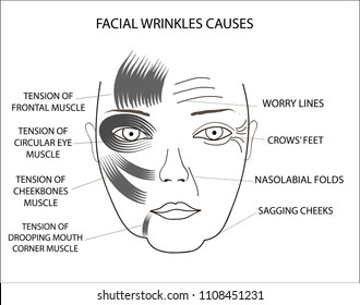 Wrinkle at Mouth Stock Illustrations, Images & Vectors | Shutterstock