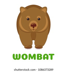 Wombat flashcard. Australian animal. Vector illustration for kids education and child reading skills development. Sight Words Flash Cards For children to learn read and spell.