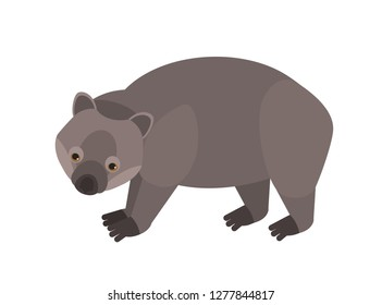 Wombat isolated on white background. Portrait of cute wild marsupial herbivorous animal. Gorgeous exotic species, endemic fauna of Australia. Colorful vector illustration in flat cartoon style.
