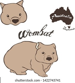 Wombat vector image isolated on white background. Wombat in full growth and head. Fauna Australia and Tasmania. Realistic wombat design.  Marsupial mammal herbivores look like small bear or big hamste