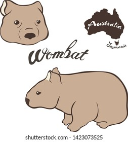 Wombat vector image isolated on white background. Wombat in full growth and head. Fauna Australia and Tasmania Realistic wombat design.  Marsupial mammal herbivores look like small bear or big hamster