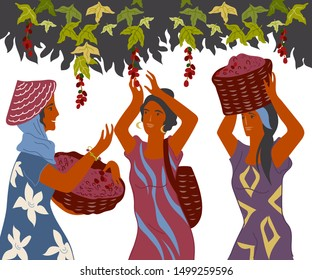 Women with baskets pick coffee beans from the bush on plantation, image for cafe and packaging. Coffee harvest gatherers in work flat cartoon vector illustration isolated on white background.