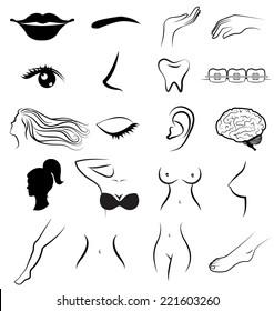 Women body parts human vector