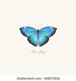 Wonderful blue morpho butterfly vector illustration isolated on light background