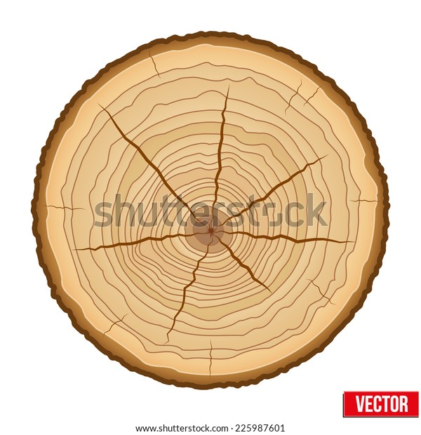 Wood Cross Section Tree Trunk Vector Royalty Free Stock Image