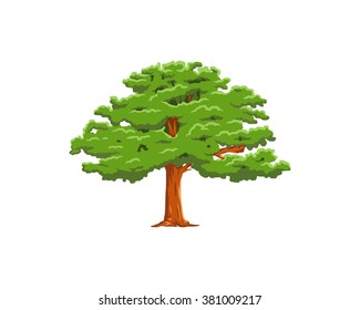 wood forest tree plant nature image vector