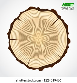 wood rings color vector illustration