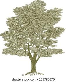 Woodcut style illustration of a single tree.