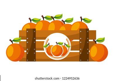 wooden basket orange on white background