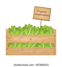 Wooden boxes of lettuce. Organic vegetables. Vector illustration.