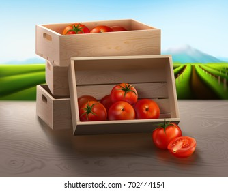 a wooden crate on the table which contains fresh ripe tomatoes from an organic farm using for products presentation, ketchup advertising, with tomatoes farm in the background.