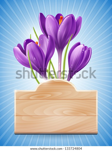 Wooden sign and spring flowers crocus on a blue background with rays