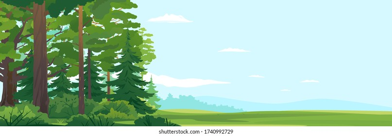Woodland edge of wild forest with big green spruce trees and oak trees in front view, tourist route through the dense spruce forest and bushes in summer sunny day nature illustration background