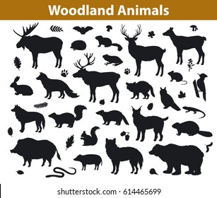 Woodland forest  and leaves collection including deer, bear, owl, wild boar, lynx, squirrel, woodpecker, badger, beaver, skunk, hedgehog