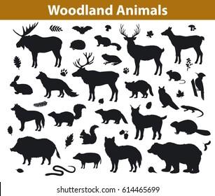 Woodland forest  and leaves collection including deer, bear, owl, wild boar, lynx, squirrel, woodpecker, badger, beaver, skunk, hedgehog