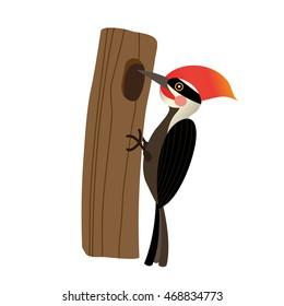 Woodpecker bird perching tree animal cartoon character isolated on white background.