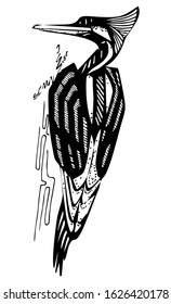 Woodpecker bird, sitting on the tree. Stylized ink drawing. Dryocopus martius. Wildlife european and americain nature. Black and white, isolated, for custom design and print. Vector stock illustration