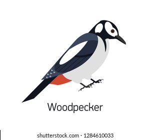 Woodpecker isolated on white background. Beautiful forest omnivorous bird, woodland inhabitant. Funny birdie. Avian species. Modern colorful vector illustration in trendy flat geometric style.