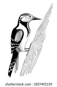 Woodpecker on a tree in doodle style. Hand drawn vector illustration isolated on white background.