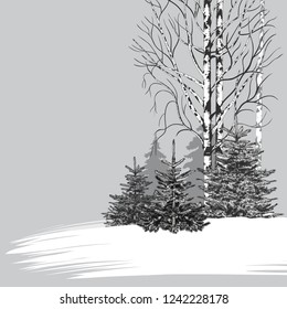 Woodside. Vector winter background. Monochrome illustration of edge of a wood with fir trees and birches.