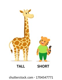 Words tall and short textcard with cartoon giraffe and tiger characters. Opposite adjectives explanation card. Flat vector illustration, isolated on white background.