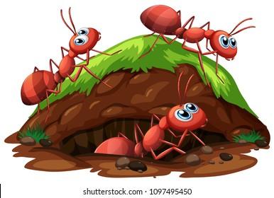 Worker Ants on White Background illustration