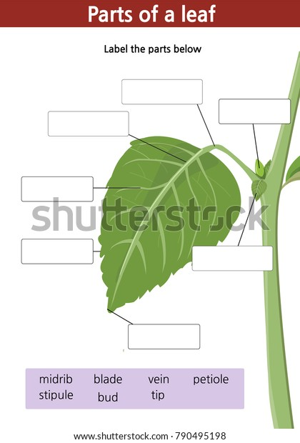Worksheet Label Parts Green Leaf Plant Stock Vector (Royalty ...