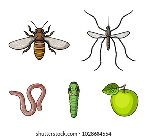 Worm, centipede, wasp, bee, hornet .Insects set collection icons in cartoon style vector symbol stock illustration web.