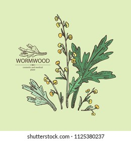 Wormwood: wormwood branch, wormwood flowers and leaves . Cosmetics and medical plant. Vector hand drawn illustration.