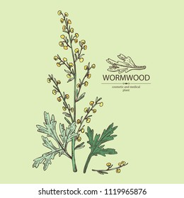 Wormwood: wormwood branch, leaves and wormwood flowers. Cosmetics and medical plant. Vector hand drawn illustration.