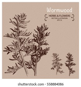 Wormwood herbs. Hand drawn vector illustration