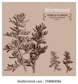 Wormwood herbs. Hand drawn vector illustration