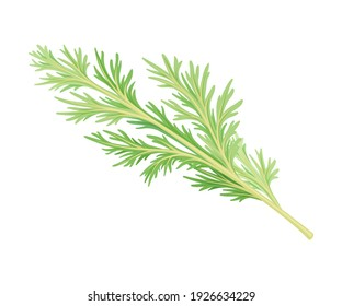 Wormwood or Southernwood Plant with Feathery Leaves Vector Illustration