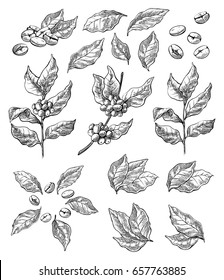 wreath from coffee beans and berry in graphic style