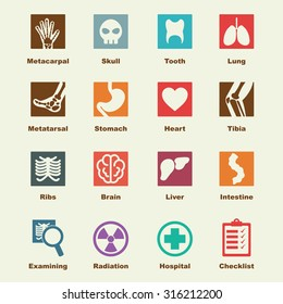 x-ray elements, vector infographic icons