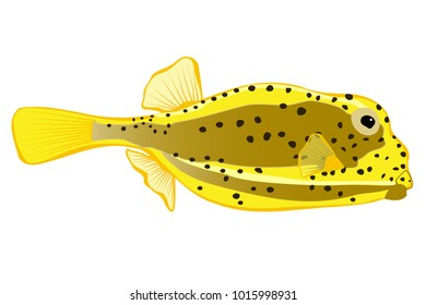 Yellow Boxfish illustration