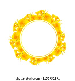 Yellow Canna indica - Canna lily, Indian Shot Banner Wreath. Vector Illustration.