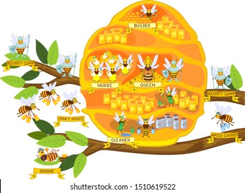 Yellow cartoon beehive on tree branch and honey bee family isolated on white background. Internal structure of beehive