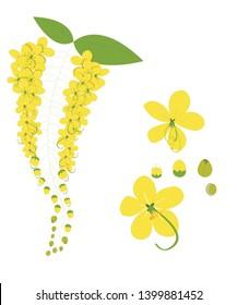 yellow Cassia fistula or golden shower flower