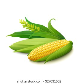 Yellow corn on the cobs, male inflorescence and leaves isolated on white background. Realistic vector illustration.