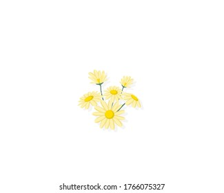 Yellow daisy flower isolated on white background. vector illustration.