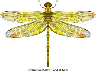 yellow dragonfly with delicate wings vector illustration