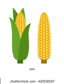 Yellow ear of corn with green leaves