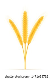 yellow ears of ripe wheat spikelet vector illustration isolated on white background