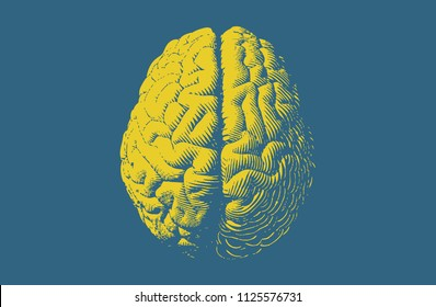 Yellow engraving brain illustration in top view isolated on blue green background