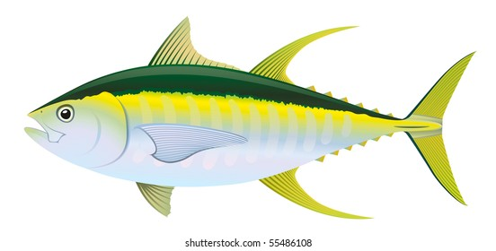 "Yellow fin Tuna (Thunnus albacares) saltwater fish. ""Full compatible. Created with gradients."""